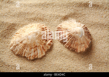 Muscheln im sand - Stockfoto