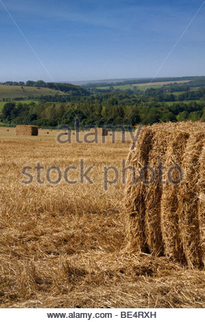 Heu-Kautionen im Bereich Tarrant Tal Dorset, England - Stockfoto