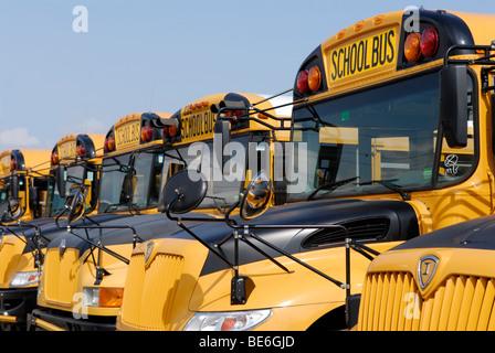Schulbusse geparkt Stockfoto