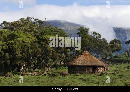 Hütte im Harenna Wald, Bale-Mountains-Nationalpark, Äthiopien - Stockfoto