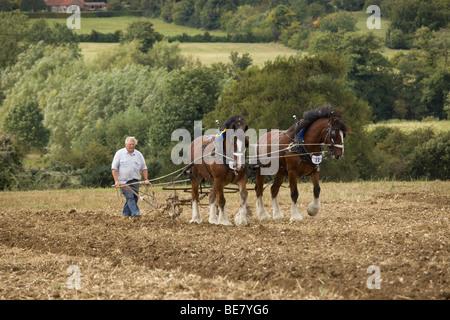 Shire Horse mit erigierten Penis Stockfoto, Bild: 37461683