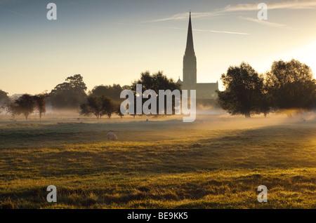 Kathedrale von Salisbury angesehen von Harnham Wässermatten in den frühen Morgenstunden - Stockfoto