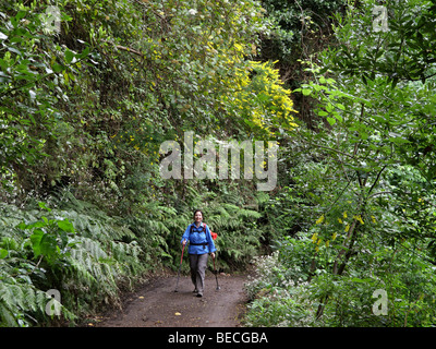 Frau zu Fuß durch eine Laurisilva, El Canal y Los Tilos-Biosphären-Reservat, La Palma, Kanarische Inseln, Spanien - Stockfoto