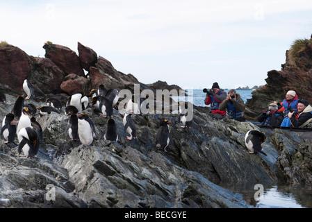 Gruppe von Abenteuer Kreuzfahrt Eco-Touristen beobachten und fotografieren Gruppe von Rock Hopper Pinguine auf Felsen - Stockfoto