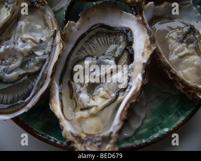 Geöffnete Austern, Frankreich, Europa - Stockfoto