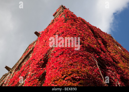 Weinreben im Herbst auf Beyer Gebäude im alten Viereck, The University of Manchester, UK - Stockfoto