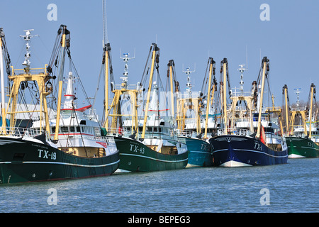 Trawler Fischerboote im Hafen von Oudeschild, Texel, Niederlande - Stockfoto