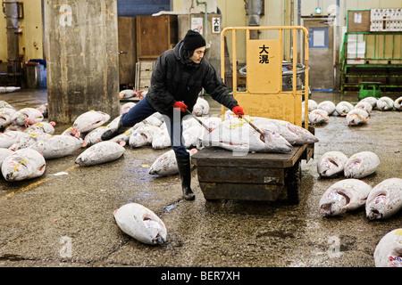 Ein Mann bereitet gefrorenen Thunfisch für Auktion im Tsukiji-Fischmarkt in Tokio - Stockfoto
