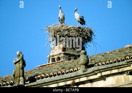 Weißstörche (Ciconia Ciconia) nisten auf Dach, Trujillo, Extremadua, Spanien - Stockfoto