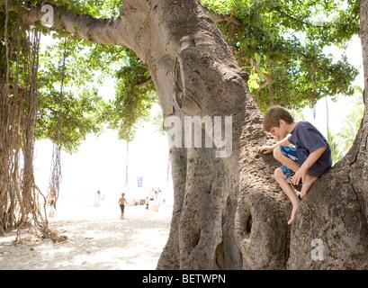 kleiner Junge sitzt auf einem Banyanbaum, blickte Sans Souci Strand Waikiki, Hawaii - Stockfoto