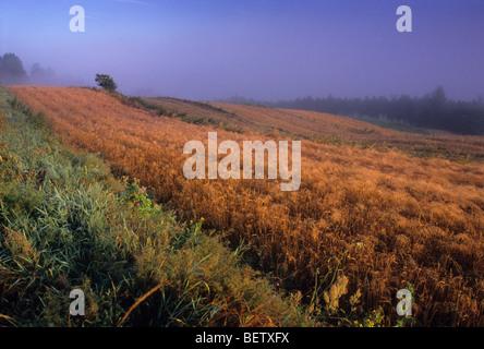 Polen Land Bio-Bauernhof Nebel Nebel - Stockfoto