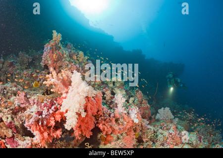 Korallenriff und Taucher, Himendhoo Thila, Nord Ari Atoll, Malediven - Stockfoto