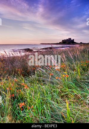 Am frühen Morgen leuchtet die Blumen auf den Dünen in der Nähe von Bamburgh Castle - Stockfoto