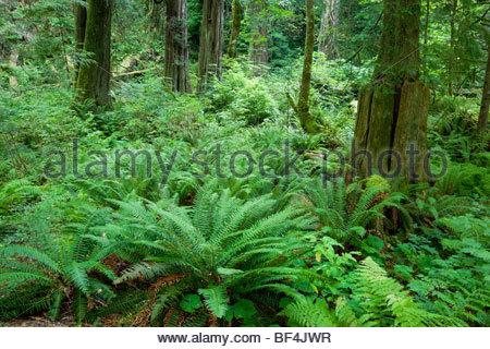 Goldstream Provincial Park, Vancouver Island, b.c. - Stockfoto