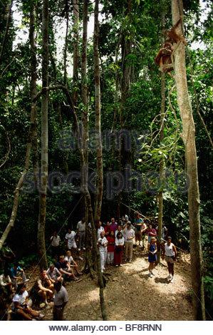 Touristen, die gerade Bornean Orang-Utans, Sepilok Reserve, Borneo - Stockfoto