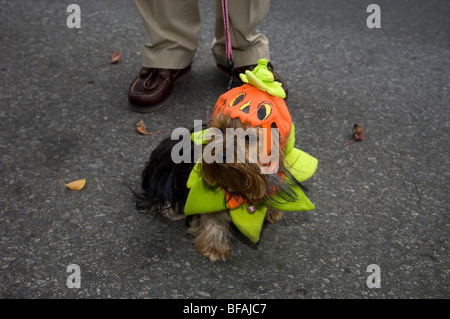 20. ordentliche Jackson Heights-Halloween-Parade in Queens, New York - Stockfoto