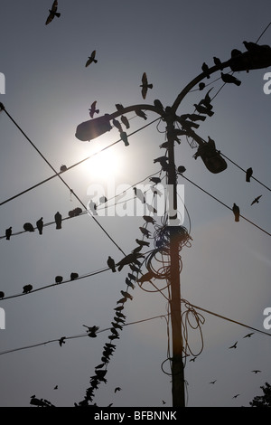 Telefonkabel Stockfoto, Bild: 90441671 - Alamy
