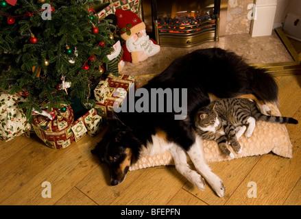 Katze kuschelte sich an einzelnen Hund Katze und einzigen Rüden im Haus - Stockfoto