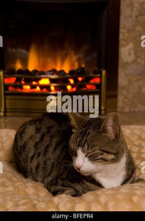Katze-Schlafsack von Feuer einzelne Erwachsene weibliche Moggy Katze im Haus - Stockfoto