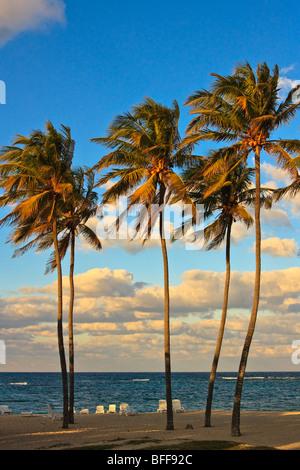 Hohe Palmen an einem kubanischen Strand, Sonnenuntergang - Stockfoto