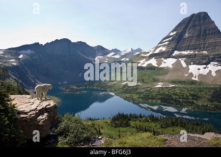 Bergziege (Oreamnos Americanus), mit Blick auf verborgenen See und Bearhat Berg, Glacier National Park, Montana, - Stockfoto