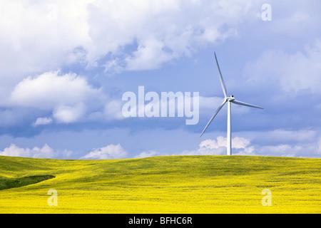 Wind Energie Turbine und Raps Feld, an einem stürmischen Tag.  St. Leon, Manitoba, Kanada. - Stockfoto