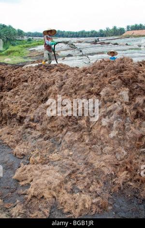 Arbeiter Spritzen Abwasser aus der Fräsvorgang auf Komposthaufen an eine große vor-Ort-Kompostieranlage Palmöl. - Stockfoto