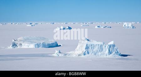 Eisberge in Festeis in der Nähe von Auster Rookery Antarktis gesperrt - Stockfoto