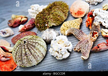 Verschiedene Arten von Meereslebewesen vom Atlantischen Ozean in Neufundland, Kanada - Stockfoto