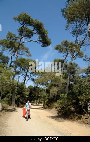 Radfahrer-Radfahren entlang Sandy Track im Pinienwald, Île de Porquerolles oder Insel, Iles d'Hyères, Var, Côte - Stockfoto