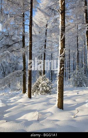 Winter Wonderland in North York Moors National Park - Stockfoto