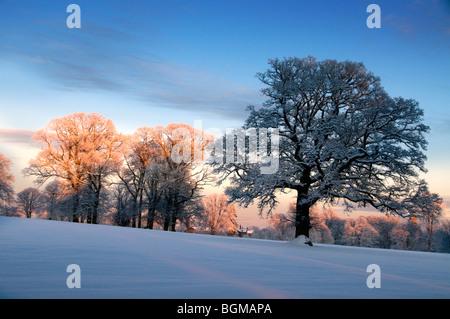 Winter-Wald-Szene - Stockfoto