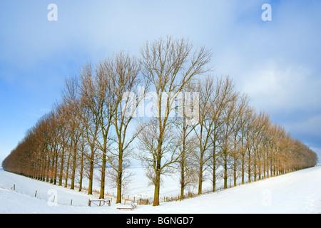 Komposition mit Bäumen in der Johannes Kerkhovenpolder in der Nähe von Woldendorp, Provinz Groningen, Niederlande - Stockfoto