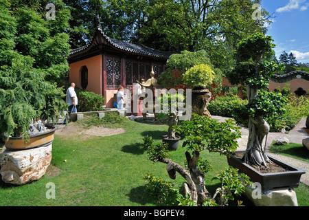 bonsai baum garten in der chinesischen und japanischen. Black Bedroom Furniture Sets. Home Design Ideas