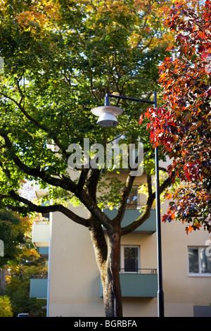 Bäume im Herbst, Schweden. - Stockfoto