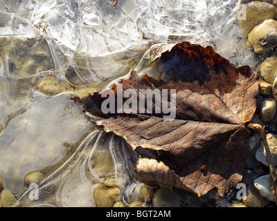 Frostigen Kieselsteinen und Blatt in Radley, Oxfordshire - Stockfoto