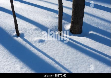 Schatten auf dem Schnee im Wald auf einem Winternachmittag, Meaford, Ontario, Kanada - Stockfoto