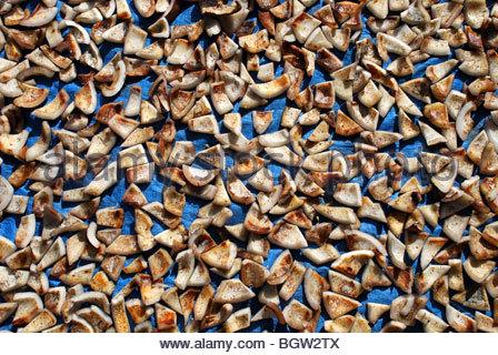 Kleine Stücke Der Kokosnuss Trocknen In Der Sonne In Kopra Flores