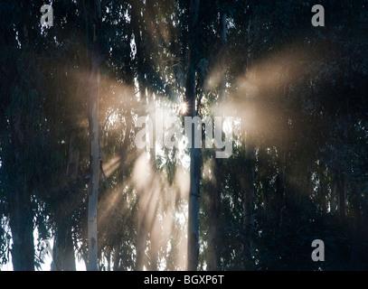 Sunburst durch Bäume in Indien, Silhouette - Stockfoto