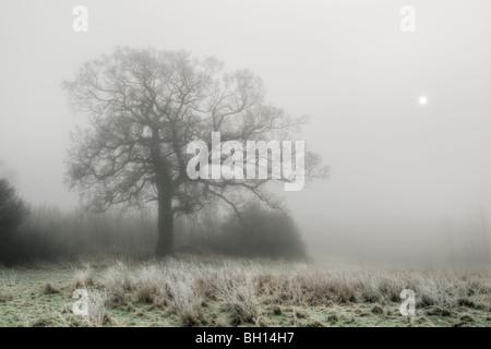 Winterliche Szene von Frost und Dichter Nebel mit Eiche in Feld mit Sonne versucht, durch den Nebel, aufgenommen - Stockfoto