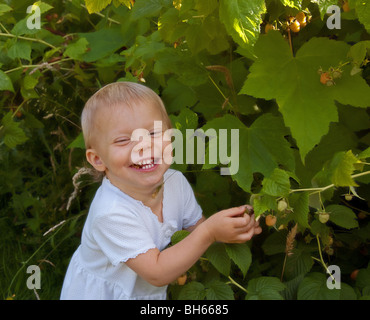 Dieses kleine Kleinkind Mädchen trägt ein weißes Kleid und lachen beim Pflücken frischer gelbe Himbeeren aus der - Stockfoto