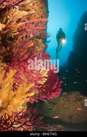 Scuba Divng Medes-Inseln, Carall Bernat, Costa Brava, Mittelmeer, Spanien - Stockfoto