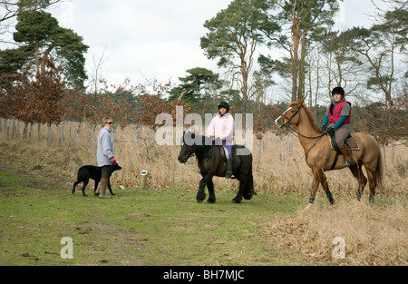 Reiter und Frau zu Fuß den Hund, Thetford Forest, Norfolk, Großbritannien - Stockfoto