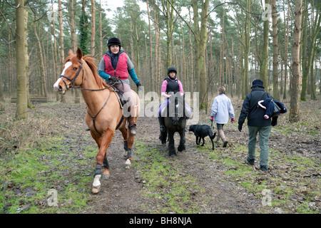 Pferd, Reiter und Frauen Spaziergang mit dem Hund, hintere Ansicht, Thetford Forest, Norfolk, Großbritannien - Stockfoto