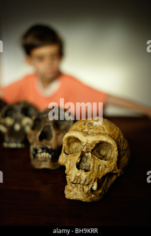 Junge schaut Reproduktion Schädel der ausgestorbenen Vorfahren des Menschen - Stockfoto
