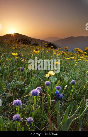 Wildblumen auf der Forca Canapine bei Sonnenaufgang im Nationalpark der Monti Sibillini, Umbrien, Italien Stockfoto