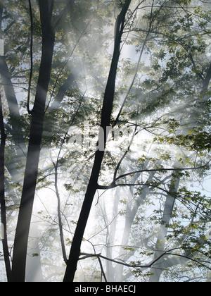 Sonnenlicht filtert durch den Rauch, wie es erhebt sich zwischen den Bäumen in einem Wald in Brand. - Stockfoto