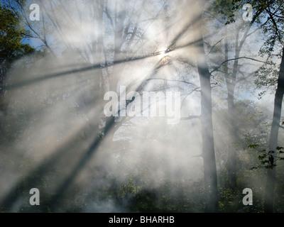 Rauch von einem Waldbrand steigt durch die Bäume in einem Wald. Sonnenlicht filtert durch den Dunst. - Stockfoto