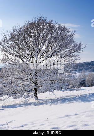 Winter in Newlands Ecke in der Nähe von Guildford, Surrey, UK. - Stockfoto