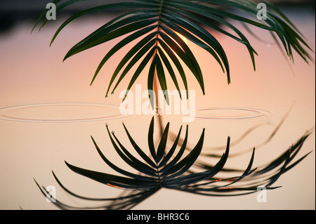 Palmblatt reflektiert in einem noch Pool bei Sonnenaufgang in Indien